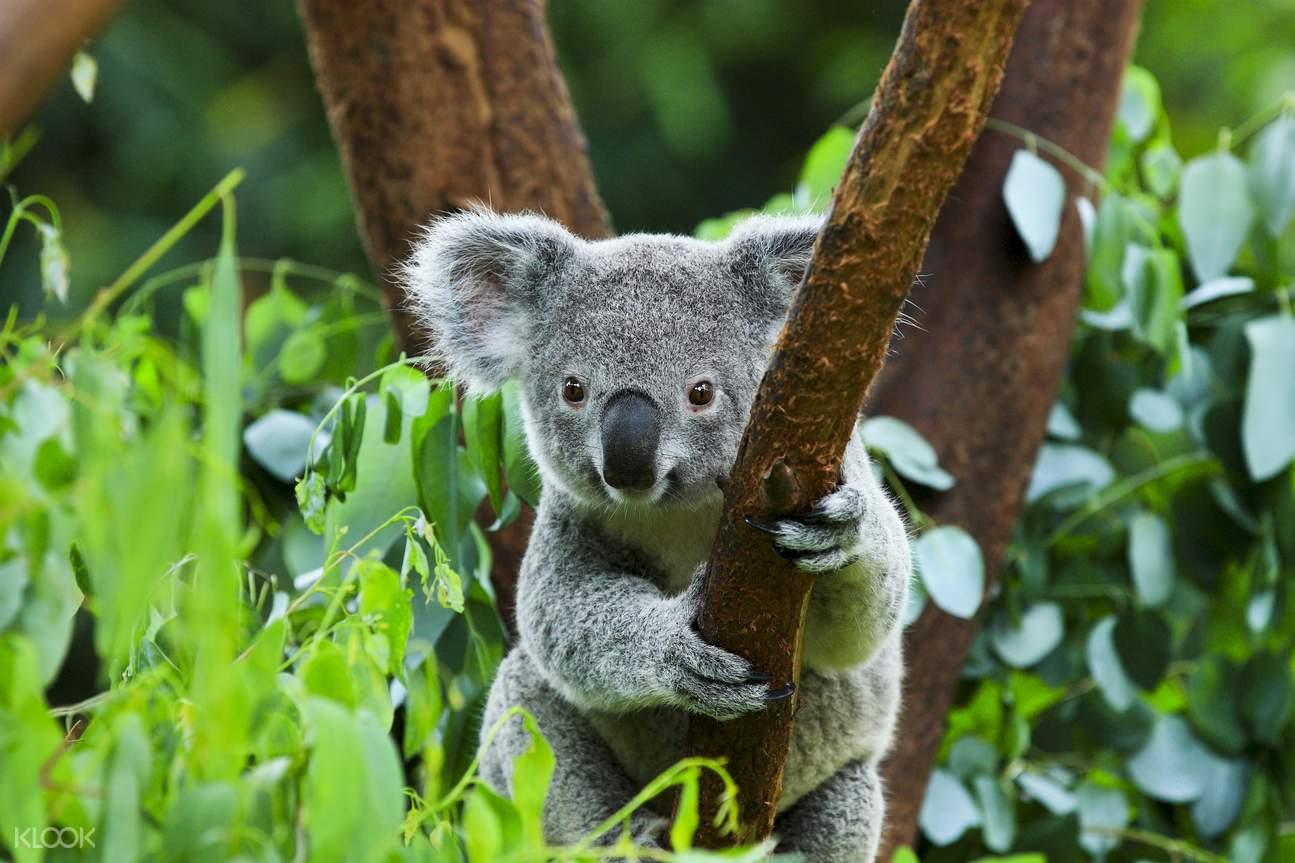 来到澳洲国家动物园,你会发现动物世界是如此狂野,这里有1,200多种